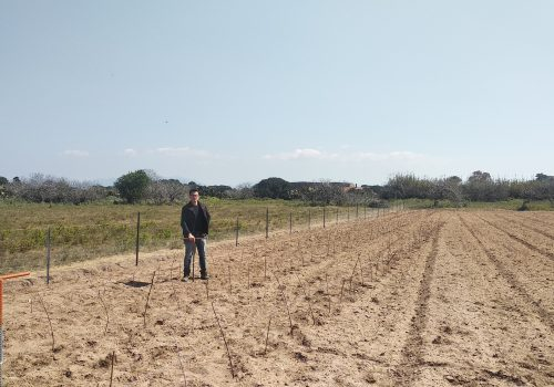 Nuovo impianto carignano a piede franco